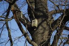 Drewniany  Domek  Dla  Ptaków  Na  Wielkim  Drzewie
