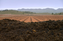 View Of A Pile Of Organic Waste For Composting In A Vineyard
