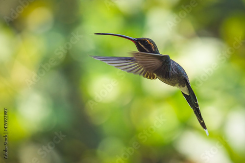 Fototapeta premium Closeup shot of a flying hummingbird with green bokeh background