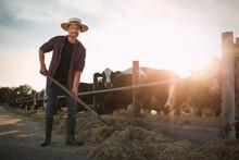 Man With Shovel Working Near Cow Pen On Farm. Animal Husbandry