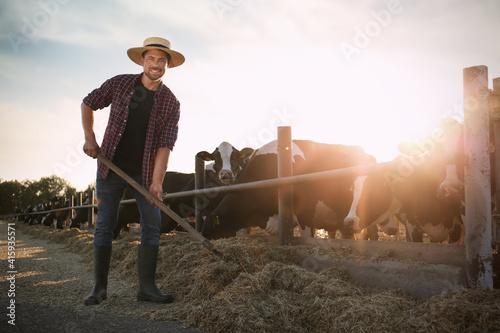 Fototapeta Man with shovel working near cow pen on farm. Animal husbandry obraz