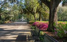 Spring Azalea In Bloom At Historic Savannah Forsyth Park Fountain  - Georgia