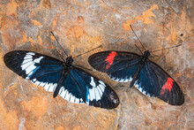 Top View Of Tropical Butterflies On A Rock Surface