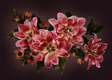 Pink Tulips And Ornithogalum Flowers On Dark Background