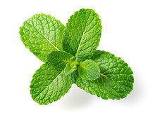 Mint Leaves. Fresh Mint On White Background. Mint Leaf Isolated. Full Depth Of Field.