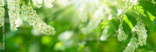 Obraz na plátně idyllischer frühling mit baumblüte