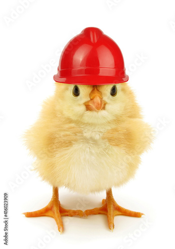 Obraz na plátne Cute chick with working helmet funny conceptual photo