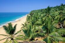 Beach And Coconut Palms, Kovalam Beach, Kerala State, India, Asia