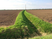 Drilled Arable Farmland In Springtime. Water Drainage Ditch With Grass Verges. Europe UK East Lincolnshire Trusthorpe.
