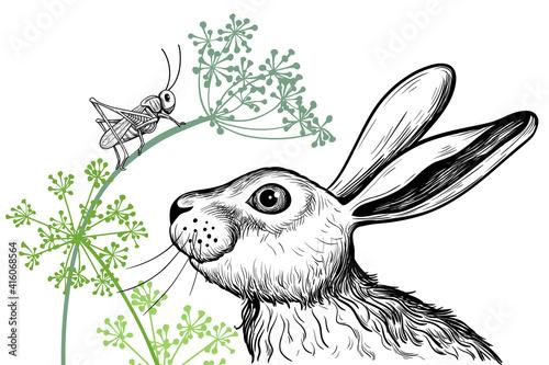 Fotografie, Obraz .A cute hare examines a grasshopper sitting on a dill twig. Vector realistic dra