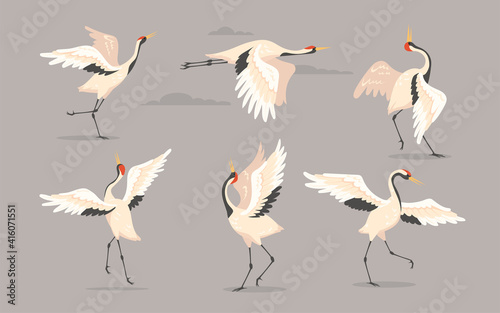 Fototapeta premium Japanese crane set. White oriental heron or stork, bird flying, dancing or walking with spread wings isolated on grey. Vector illustration for nature, wildlife, wild animal concept