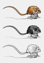 Light Small Jumper. A Jerboa, A Field Mouse With A Very Long Tail. Mouse, A Rodent With A Long Tail.Isolated.Color, Black And White Illustration And Outline For Coloring. Vector Illustration