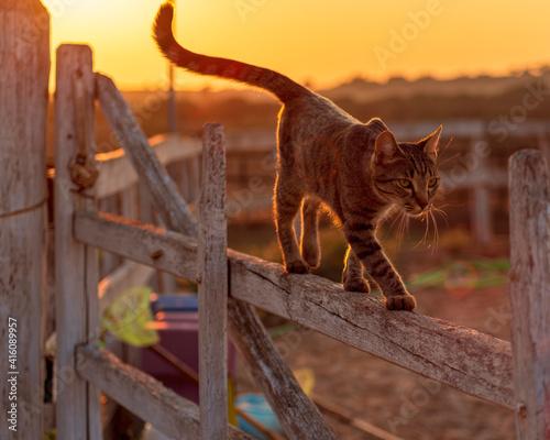 Fototapeta gatto al tramonto