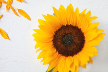Yellow Sunflower On A White Background. Yellow Sunflower Bouquet, Autumn Concept, Top View, Space For Text. Isolated On White Background. Sunflower Blooming. Bright Yellow Flowers