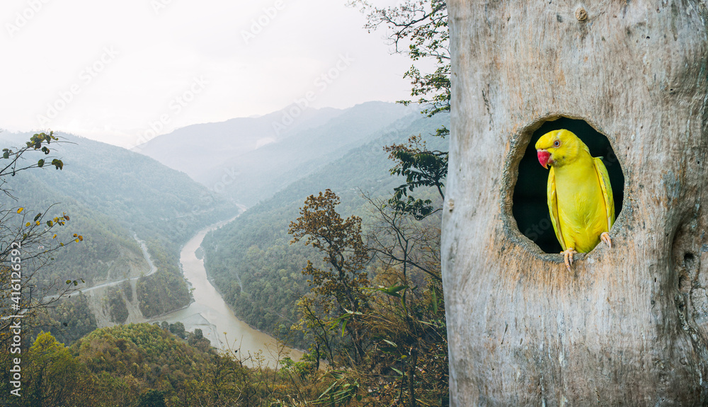 Fototapeta A picture of a parrot in the nest Rich forest scene