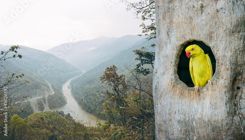 Fototapeta A picture of a parrot in the nest Rich forest scene obraz