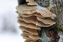 A Group Of Shelf Fungus