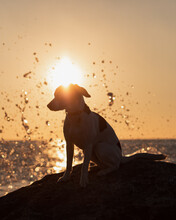 Dog At A Rock With Water Splashing In Background At Sunset