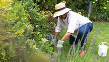 Thoughtful African American Senior Woman Wearing Gardening Gloves Gardening In The Garden