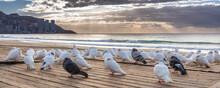 Birds At Benidorm Beach