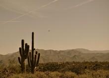 Vintage Desert