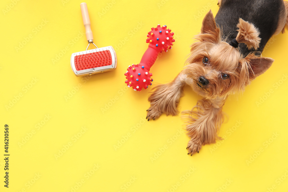 Fototapeta Cute funny dog and pet care accessories on color background