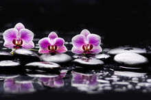 Still Life With Pink Three Orchid, Close Up With Pile Of Black Stones