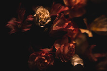 Abstract Dark Floral Background, Fuzzy Photo Of Delicate Flowers, Text Background For March 8