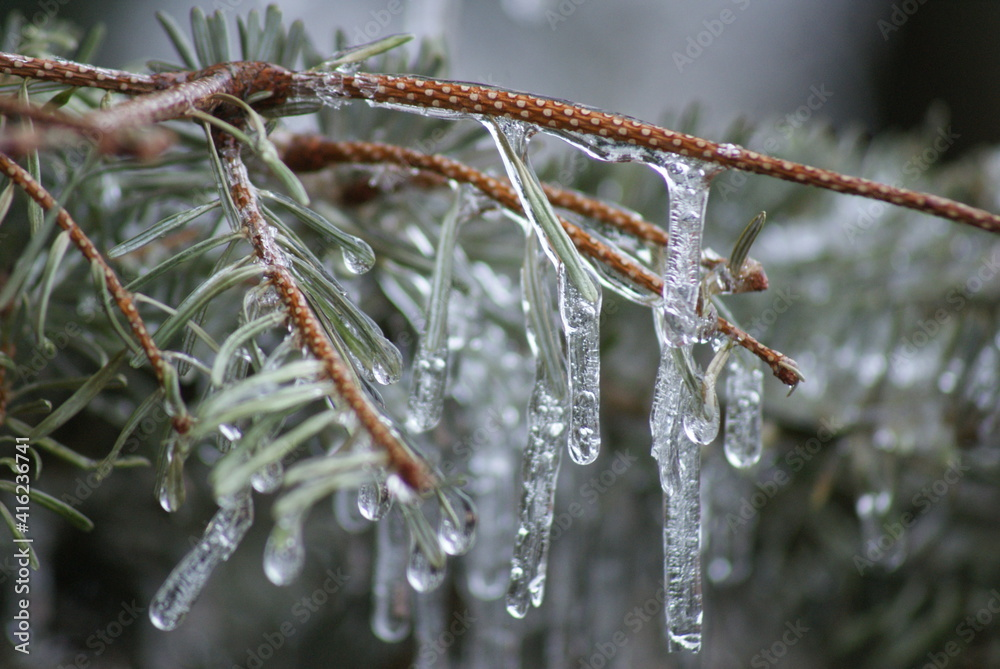 Fototapeta Sople lodu