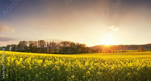 Sunset over canola field with path  in Slovakia © TTstudio