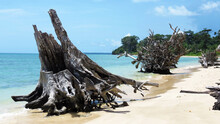 Driftwood On A Tropical Beach With Blue Sky And Turquoise Water In Port Blair, Andaman And Nicobar Islands, India.