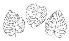 Hand-draw Set Of Tropical Monstera Leaves. Exotic Plant - Monstera Deliciosa. Black Contours Isolated On A White Background. Vector Stock Illustration For Cards, Flyers, Stickers, Textile, Web Design.
