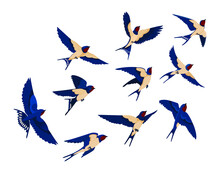 Flying Bird Various View Collection Set Flock Swallows Isolated White Background Cartoon Illustration