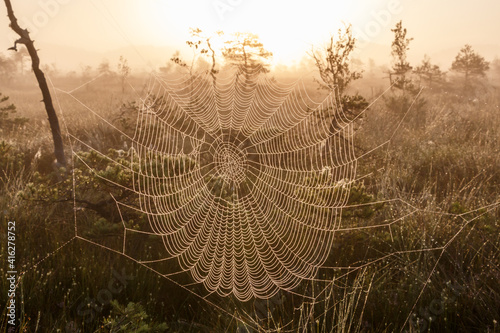 Papel de parede Spider web with dew drops and sunrise in misty morning
