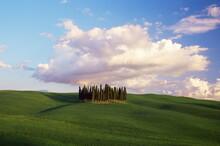 Countryside Near Montalcino, Siena Area, Tuscany