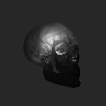 Human Skull From The Side Black Lit Up Inside