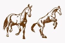 Vintage Vector Set Of Graphical Horses,illustration