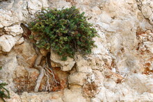 Green Plants And Flowers Grow In The Cracks Of Stones And Rocks