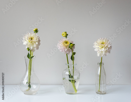 Fotografía Three white dahlias in glass vases on table against wall