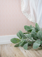 An Artificial Lambs Ear Plant With Lace Curtain And A Pretty Pink Background