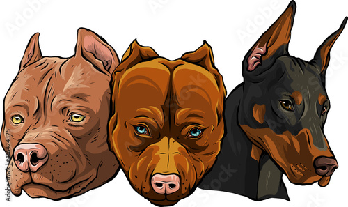 Fotografía Heads of dogs pitbull dobermann bulldog vector
