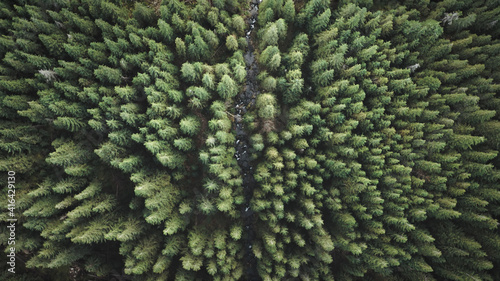 Canvas Print Stone river at pine trees top down aerial