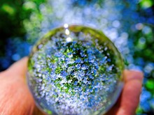 Small Blue Flowers Seen Distorted Through The Lens Ball With Sun Flare