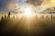 Aerial View Of Dark Green Pine Trees In Spruce Forest With Sunrise Rays Shining Through Branches In Foggy Fall Mountains.