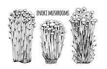 Enoki Mushrooms Vector Illustration Hand Drawn, Family Of Edible Mushrooms, Asian Traditional Cuisine, Healthy Organic Food, Vegetarian Food, Fresh Mushrooms Isolated On White Background