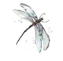 Dragonfly Watercolor Blue  Splashes. Bright Watercolor Illustration Of Colorfull Dragonfly. Hand Drawn Image Of Insect Isolated On White Background.  Logo, Card, Drawing