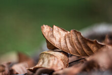 Yellow/Brown Leaves On The Ground In Fall. Background Made With Brown Dry Leaves And Illuminated With Soft Light. Dead Leaves Shot Ideal For Backgrounds And Textures. A Classic Symbol Of Autumn.
