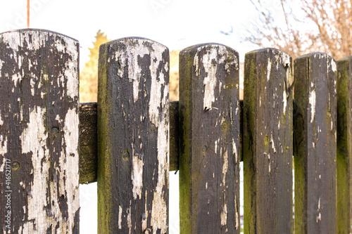 Obraz Stary zaniedbany drewniany płot wymagający pomalowania zarośnięty mchem.  - fototapety do salonu