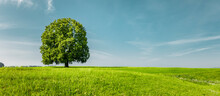 Grüner Baum Auf Auf Einer Grünen Wiese