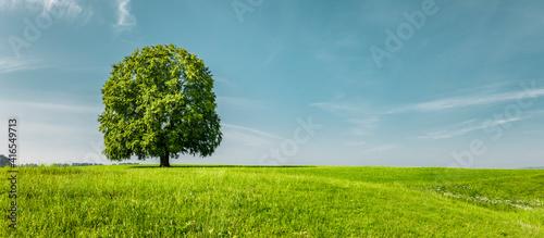Obraz na plátně Grüner Baum auf auf einer Grünen Wiese